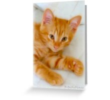 Quo - Kitten Photography By Giada Rossi Greeting Card