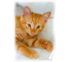 Quo - Kitten Photography By Giada Rossi Poster