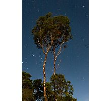 Tree among the stars - an Australian gumtree against the nightsky, Queensland Photographic Print