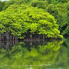 Mangroves by globeboater