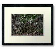The Banyan Tree Framed Print