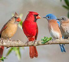 The Bluebirds Meet the Redbirds by Bonnie T.  Barry