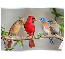 The Bluebirds Meet the Redbirds Poster