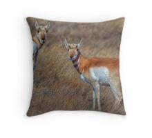 Curious Pronghorn Throw Pillow