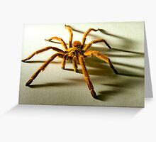 Orange Baboon Spider Greeting Card