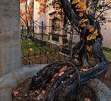 Venerable grapevine in mission cemetery by Celeste Mookherjee