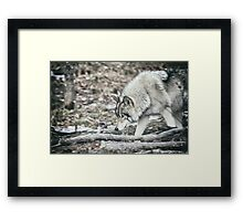 Timber Wolf Onto Something Framed Print