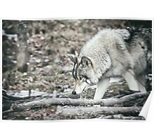 Timber Wolf Onto Something Poster