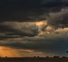 Masai Mara sunset by Harley Rustin