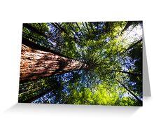 Redwoods, Rotorua Greeting Card