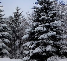 Snowy Trees by Rosemary Sobiera