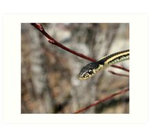 Head of a Red Sided Garter Snake in a Tree Art Print