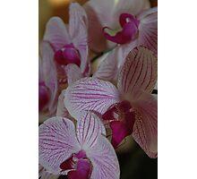 Lite Purple Photographic Print