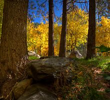 A Glimpse of Autumn by Sue  Cullumber