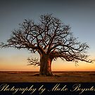 Boabs of the Kimberley, Western Australia by Mieke Boynton