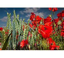 Poppies and wheat Photographic Print
