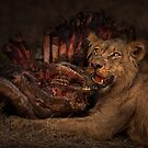 Life and Death in the Africa Bush by Peter O'Hara
