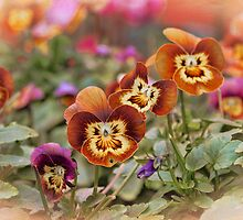 Autumn Pansies by Amar-Images