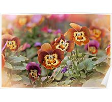 Autumn Pansies Poster