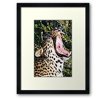 Nothing Like a Big Morning Yawn! Framed Print