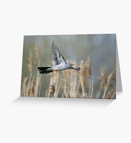 Cuckoo flying amongst reeds Greeting Card