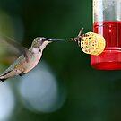 Hummingbird vs. Bee by autumnwind