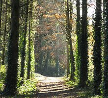 Irish forest in Blarney by Blonddesign