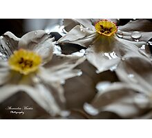 Floating Narcissus Photographic Print