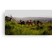 deers south africa Canvas Print