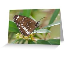 Common Crow Butterfly, Australia Greeting Card