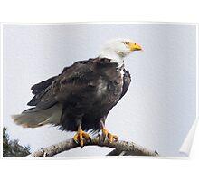 Sooke Eagle Poster