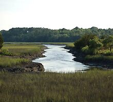 Lowcountry Creek by DCampo