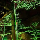 """Grove of Oaks"" Lumiere by Adrian McGlynn"