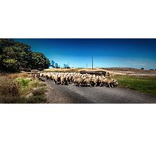 Sheep Farmer Photographic Print