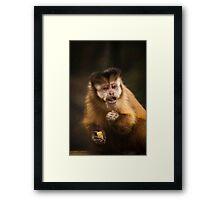Capuchin Framed Print
