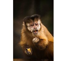 Capuchin Photographic Print