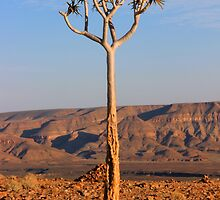 Canyon Quiver Tree by JenniferEllen