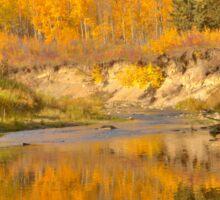 Autumn in Whitemud Ravine Sticker
