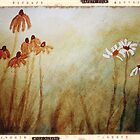 Watercolour Daisies - on film by Suze Chalmers