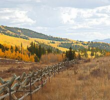 Kenosha Pass Aspens 5 by Robert Meyers-Lussier
