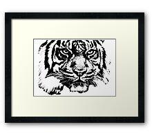 Tiger, big cat, hunter and predator Framed Print