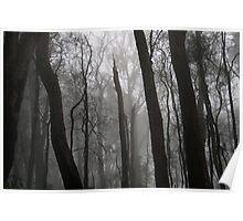 Cleland fog - monochrome Poster