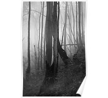Cleland fog - monochrome - 03 Poster