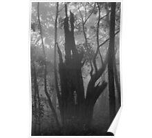 Cleland fog - monochrome - 04 Poster