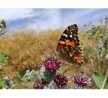 Butterfly having a breakfast Photographic Print