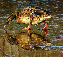 Admiration of a Duck by PineSinger