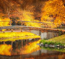 Fall over Storrow Lagoon by Owed to Nature