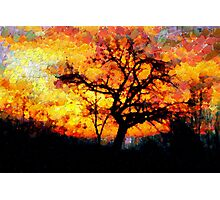 A Tree and the Dawn in Barda Village (zoom for impact) Photographic Print