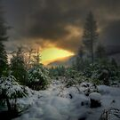 Just Another Dream ~ Fresh Snow ~ by Charles & Patricia   Harkins ~ Picture Oregon