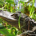 See ya later, alligator by Ronee van Deemter